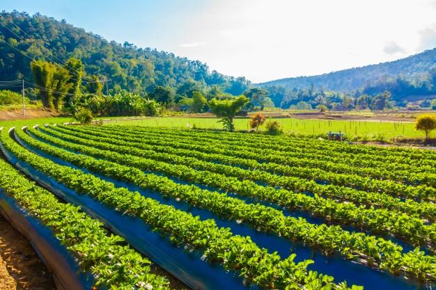 ใช้เทคโนโลยีบล็อกเชน (blockchain) เพื่อยกระดับราคาที่เกษตรกรจะได้รับกับระบบเกษตรกรรมในอนาคต